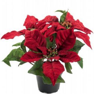 Konstväxt, Julstjärna Röd 23 cm