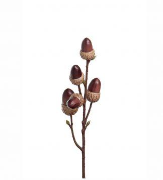 Kvist med Ekollon