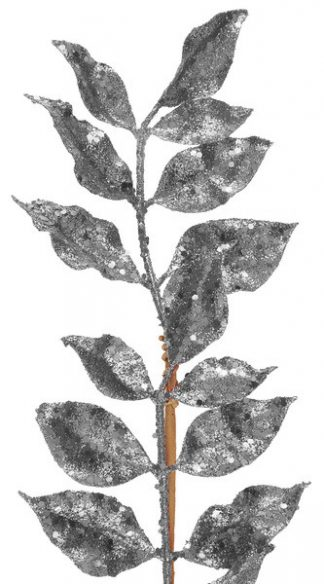 Kvist med Silverblad
